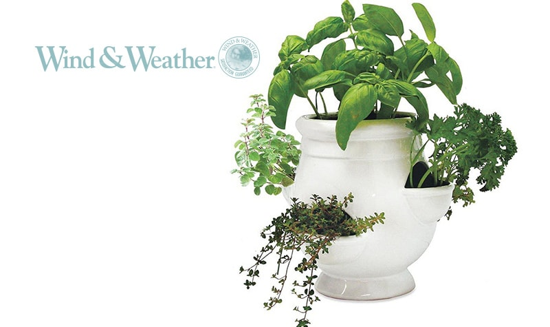 Today's Top Value at Evine - 481-526 Wind & Weather 8 Porcelain Herb Planter w Seeds